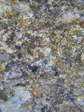 Natural background. View of ancient canyon rock somewhere covered with moss Royalty Free Stock Photography