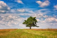 Natural background for wallpaper, single tree with amazing blue cloudy sky. Natural outdoor background with single tree in the field and amazing blue sky with royalty free stock image