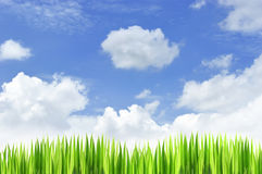 Natural background. White cloud and grasses with blue sky background Stock Photo