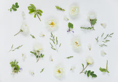 Natural background with white wild rose flowers Royalty Free Stock Images