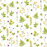 Natural background with wild flowers, plants and fern leaves. Watercolor botanical seamless pattern with hand painted Royalty Free Stock Photography