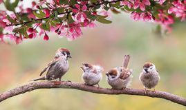 Natural Background With Birds Sparrow With Little Chicks Sitting On A Wooden Fence In The Village Garden Surrounded By Yab Flowers Stock Image