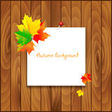 Natural background with wooden board and autumn. Leaves.White blank with autumn maple leaves. Vector illustration Royalty Free Stock Photography