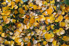 Natural background of yellow autumn leaves Royalty Free Stock Photos