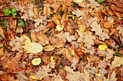 Natural background: yellow and orange dry leaves Stock Photography
