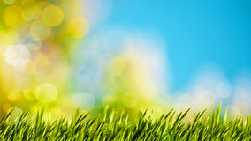 Natural backgrounds with green foliage. Under bright summer sun Royalty Free Stock Photography
