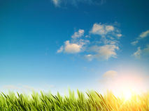 Natural backgrounds with green foliage. Under bright summer sun Royalty Free Stock Images