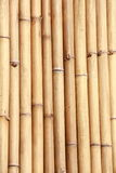 Natural bamboo Stock Photography