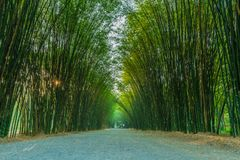 Natural bamboo arch of Eakkachat temple. Natural bamboo arch on both side of the walking path leading to Eakkachat temple in Nakornnayok province, Thailand Stock Photos