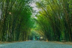 Natural bamboo arch of Eakkachat temple. Natural bamboo arch on both side of the walking path leading to Eakkachat temple in Nakornnayok province, Thailand Royalty Free Stock Photos