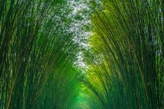 Natural bamboo arch of Eakkachat temple. Natural bamboo arch on both side of the walking path leading to Eakkachat temple in Nakornnayok province, Thailand Royalty Free Stock Photography