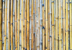 Natural bamboo background Stock Image