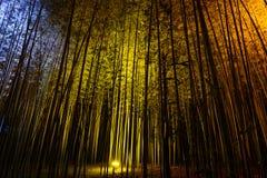 Natural bamboo background illuminated by colorful lights at night during the Arashiyama Lantern festival. Bamboo background illuminated by beautiful blue, yellow Stock Photo