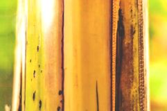 Natural Bamboo Background. Living green. Copy space. Closeup royalty free stock photo