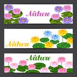 Natural banners with lotus flowers and leaves. Design for cards, flayers, brochures, advertising booklets Stock Image