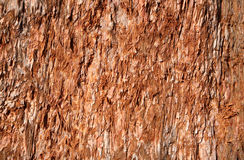 Natural bark texture. Royalty Free Stock Image