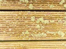 Natural barn wood floor with green moss or lichen cover. Hard wood planks or boards royalty free stock photos