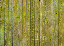Natural barn wood wall covered with green moss or lichen. Stock Photo