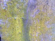 Natural barn wood wall covered with green moss shabby background Stock Photo