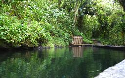 Natural basin in gaudeloupe. Natural basin in guadeloupe forest royalty free stock images