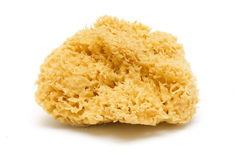 Natural bath sponge Royalty Free Stock Photography