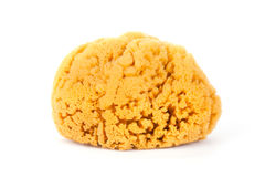 Natural bath sponge Royalty Free Stock Photos