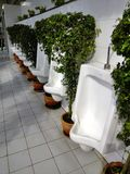 Natural bathroom. Urinals with green tree Royalty Free Stock Images