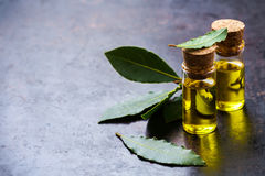 Natural bay laurel essential oil for beauty and spa royalty free stock photography