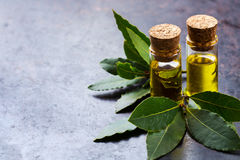 Natural bay laurel essential oil for beauty and spa. Healthy lifestyle concept. Natural bay laurel essential oil, essence in glass bottle with leaves on a rusty Royalty Free Stock Photo