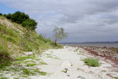 Natural beach at the baltic se. A picturesque natural beach at the baltic sea near Flensburg Royalty Free Stock Images