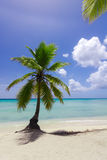 Natural beach with a palm tree Royalty Free Stock Photo