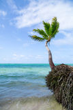 Natural beach with a palm tree Royalty Free Stock Photos