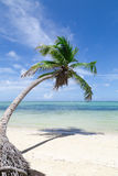 Natural beach with a palm tree Stock Image
