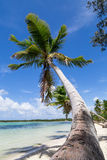 Natural beach with a palm tree Stock Images