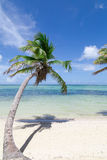 Natural beach with a palm tree Royalty Free Stock Photography