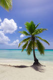 Natural beach with a palm tree Royalty Free Stock Image