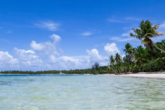 Natural beach with palm trees Royalty Free Stock Photos