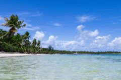 Natural beach with palm trees Stock Photos