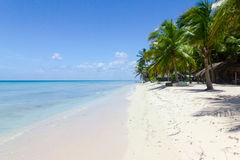 Natural beach with palm trees. In the Dominican Republic Royalty Free Stock Photography