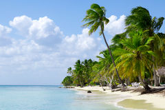 Natural beach with palm trees Royalty Free Stock Images