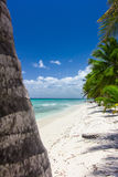 Natural beach with palm trees. In the Dominican Republic Royalty Free Stock Images