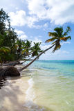 Natural beach with palm trees Stock Image