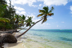 Natural beach with palm trees. In the Dominican Republic Stock Image