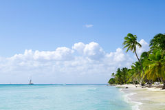 Natural beach with palm trees Stock Images