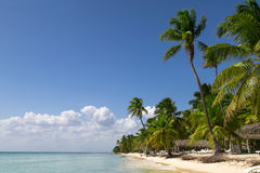 Natural beach with palm trees Stock Photo