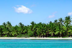 Natural beach with palm trees. In the Dominican Republic Royalty Free Stock Image