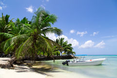 Natural beach with palm trees Royalty Free Stock Image