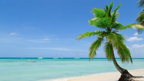 Natural beach with palm trees Royalty Free Stock Photo