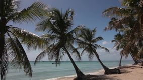 Natural beach with palm trees. In the Dominican Republic stock video