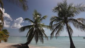 Natural beach with palm trees. In the Dominican Republic stock video footage